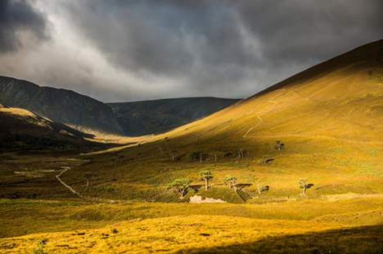 Alladale Wilderness Reserve. Het Alladale Wilderness Reserve is een natuurgebied in het Caledonische woud in het noorden van Schotland. Paul Lister wil de wolf terugbrengen. Beeld
