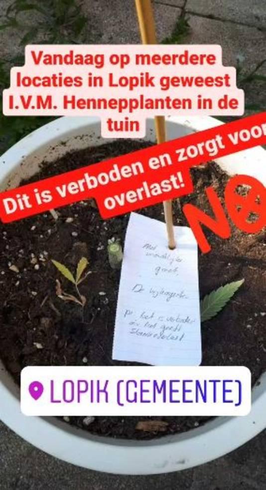 De politie benadrukt: het houden van hennepplanten in de tuin is niet de bedoeling