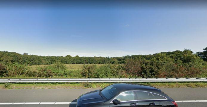Het maïsveld zoals gezien vanaf de A28.