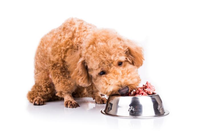 De bacterie zit in rauw hondenvoer.