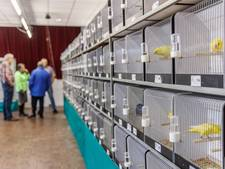 Laatste Vogeltentoonstelling in  Parochiehuis in Klundert