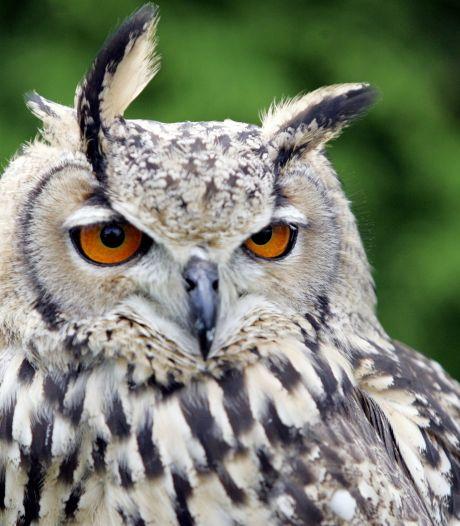 Terror-oehoe blijft vast zitten in vogelopvang