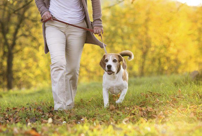 Hondenbezitters in Veldhoven betalen volgend jaar 10 euro minder hondenbelasting.