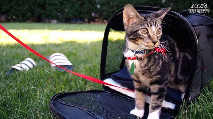 CatVideoFest is op 8 augustus.