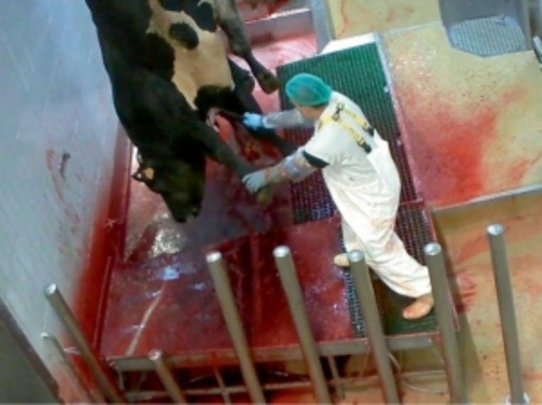 'Je kunt er donder op zeggen dat er een afschuwelijk verhaal zit achter het overgrote deel van het vlees dat je eet' Beeld