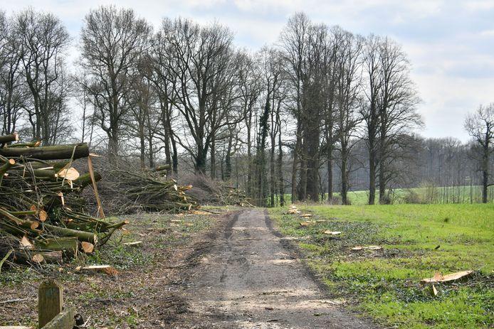 Hoge Lutterweg, waar een mooie bomenrij is gekapt, een zogenaamde groene tunnel.