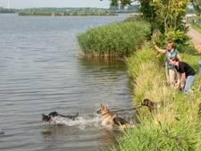 Stadsidee Harderwijk 2017: het hondenstrand