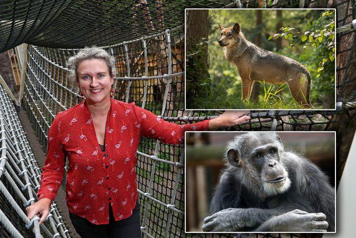Astrid Wassenaar, directeur van DierenPark Amersfoort, in de loopbrug bij de brilberen in het park. Inzet: een wolf en chimpansee Mike.