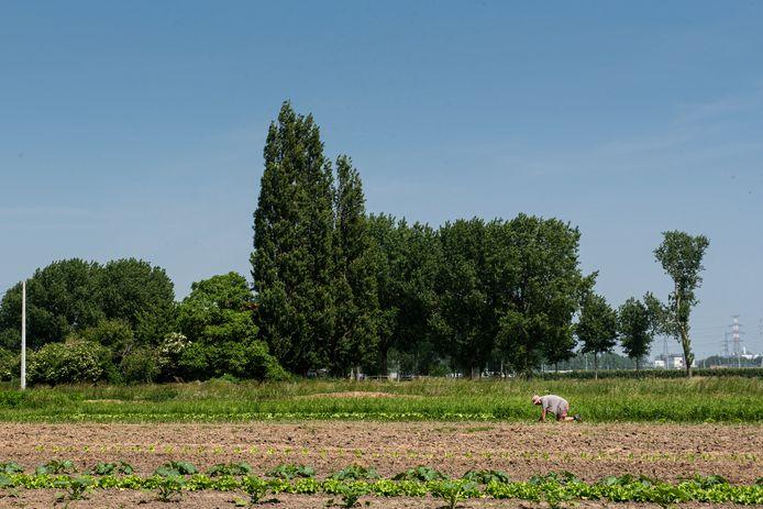 De PFOS-vervuiling treft mogelijk een héél groot deel van het Waasland.