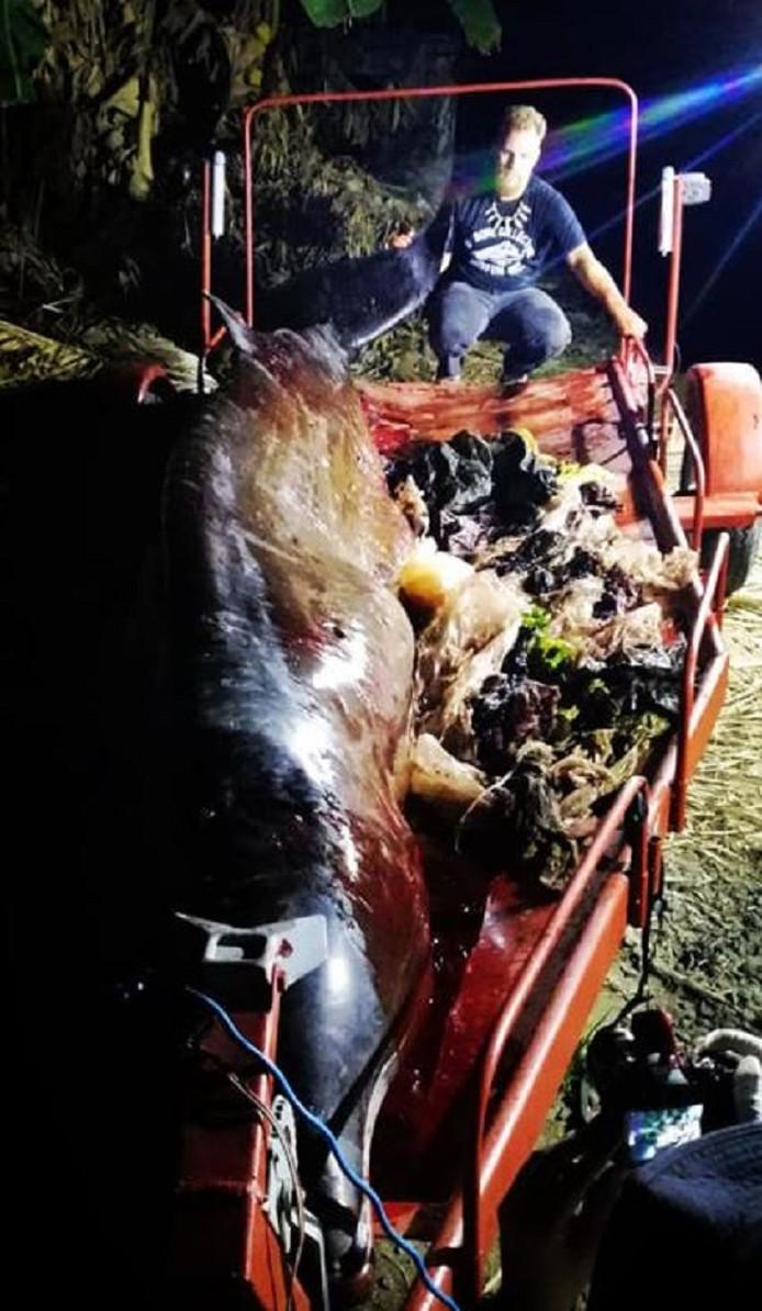 Darrell Blatchley met de gestrande spitssnuitdolfijn. Naast het beest ligt het plastic afval uit de maag van het dier.