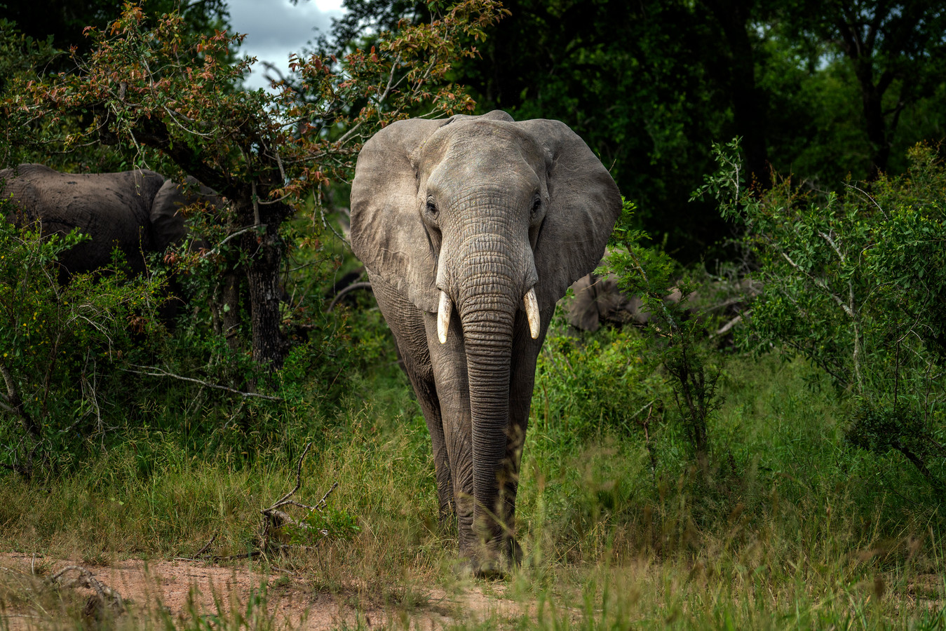 Archiefbeeld van een olifant in het Zuid-Afrikaanse Krugerpark.