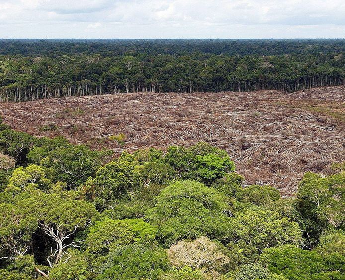Ontbossing in de Amazone.