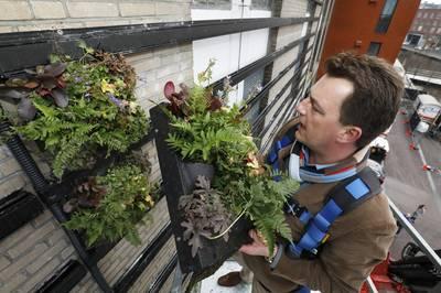 Meer groene gevels in Bredase binnenstad