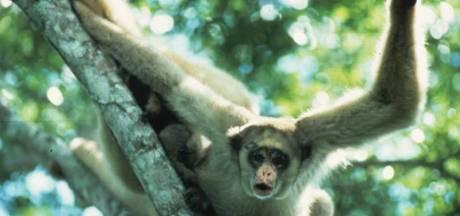 Aap leeft ruim 30 jaar in leeg dierenpark Wassenaar