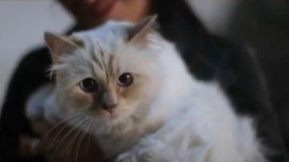 VIDEO. Kan Choupette, de kat van Karl Lagerfeld zijn fortuin erven?