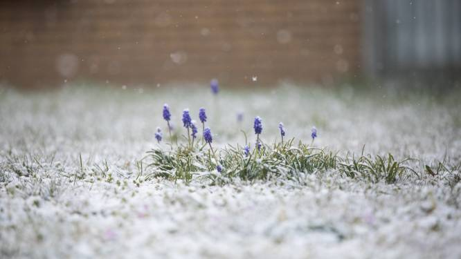 IN BEELD. Het is lente en... het sneeuwt in Limburg