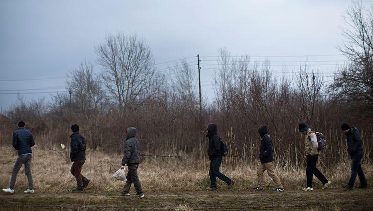 Migranten in de buurt van de Servische grens met Hongarije. Beeld ap