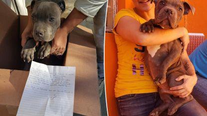 """Mexicaanse jongen (12) laat hond achter aan asiel: """"Verberg hem voor mijn papa want hij mishandelt hem"""""""