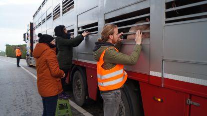 """Dierenrechtenactivisten voeren vreedzaam actie aan slachthuis Tielt: """"Er is niks veranderd. Dieren gaan nog altijd levend naar binnen en komen in stukjes terug buiten"""""""
