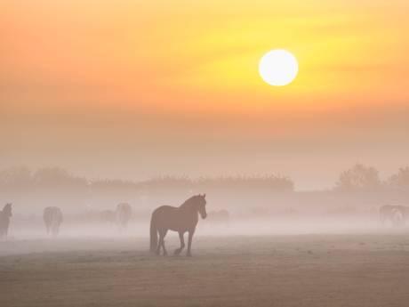 Ladderzatte spreeuwen, jagende wolken en pompoenen: herfst neemt bezit van Zeeland