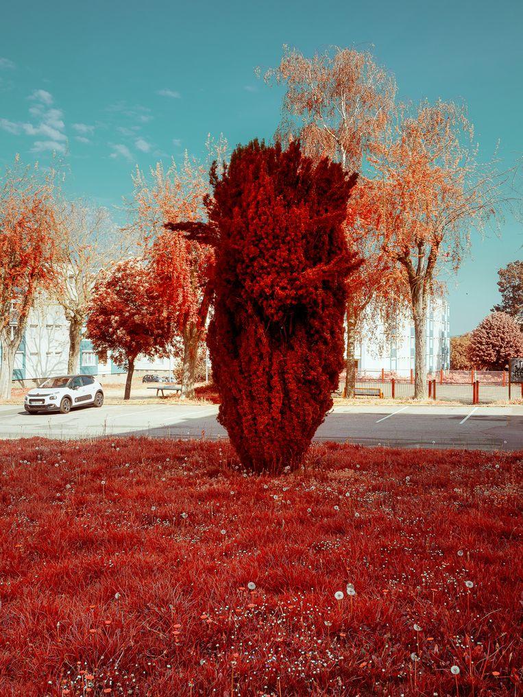 Een woeste conifeer die de illusie van een explosie wekt, het omslagbeeld van 'Ramkoers', uit de serie 'Covid-1_', nr. 8. Beeld Martin de Haan