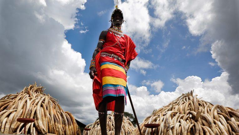 Een Maasai voor de bergen ivoor die zaterdag verbrand zullen worden. Beeld epa