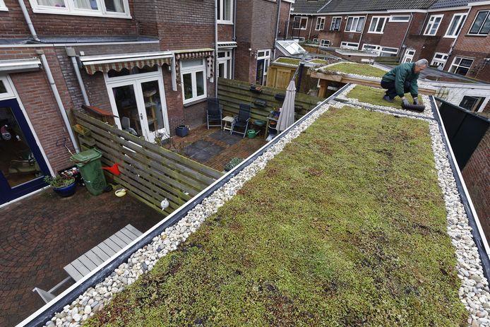Een dak van sedum. Wie in Heusden een dak van dergelijk materiaal voorziet, kan in aanmerking komen voor subsidie.
