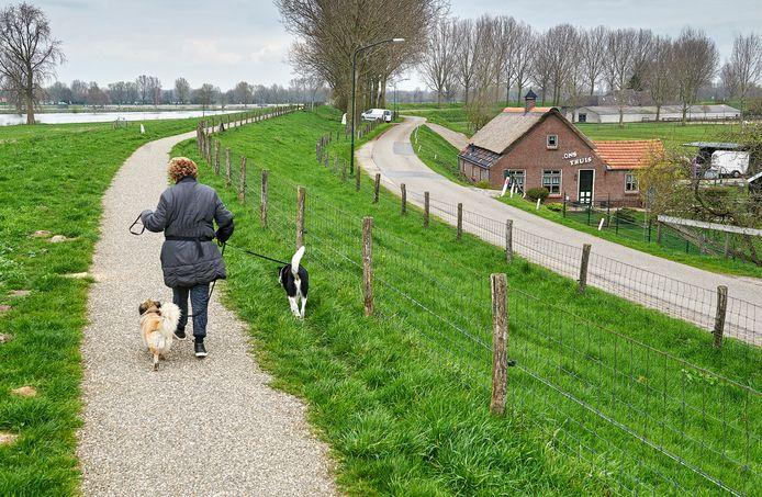De Maasdijk, nabij Megen.