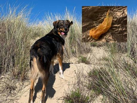 Hondenbezitters woest: stukken vlees met glasscherven erin gevonden op hondenveldje