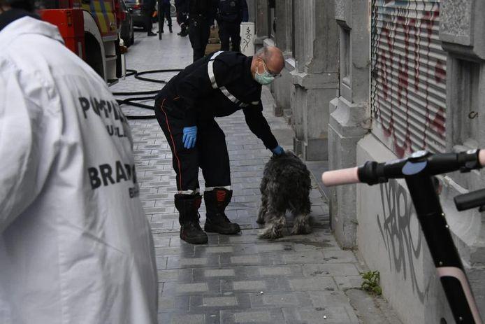 Een brandweerman ontfermt zich over een hond.
