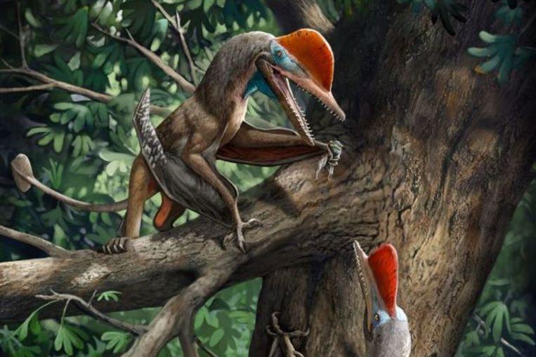 Impressie van de pterosauriër 'Monkeydactyl'. Beeld RV