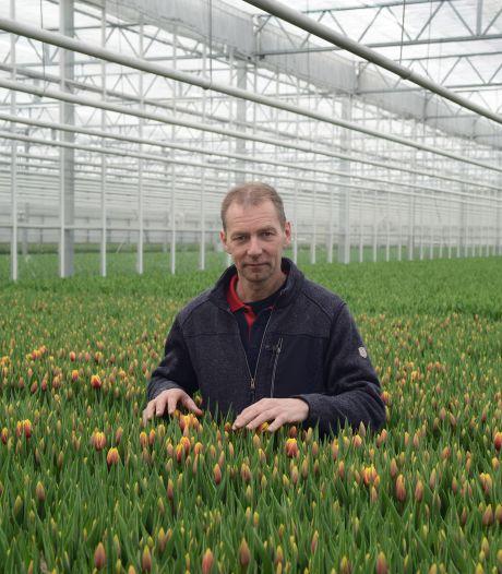 Miljoenen Zeeuwse tulpen dreigen in container te verdwijnen