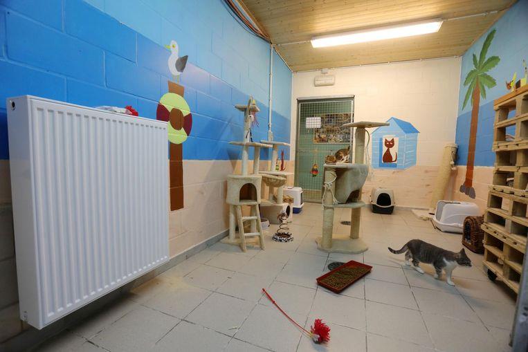 De katten kregen onlangs een nieuwe verwarming ter vervanging van de elektrische vuurtjes.