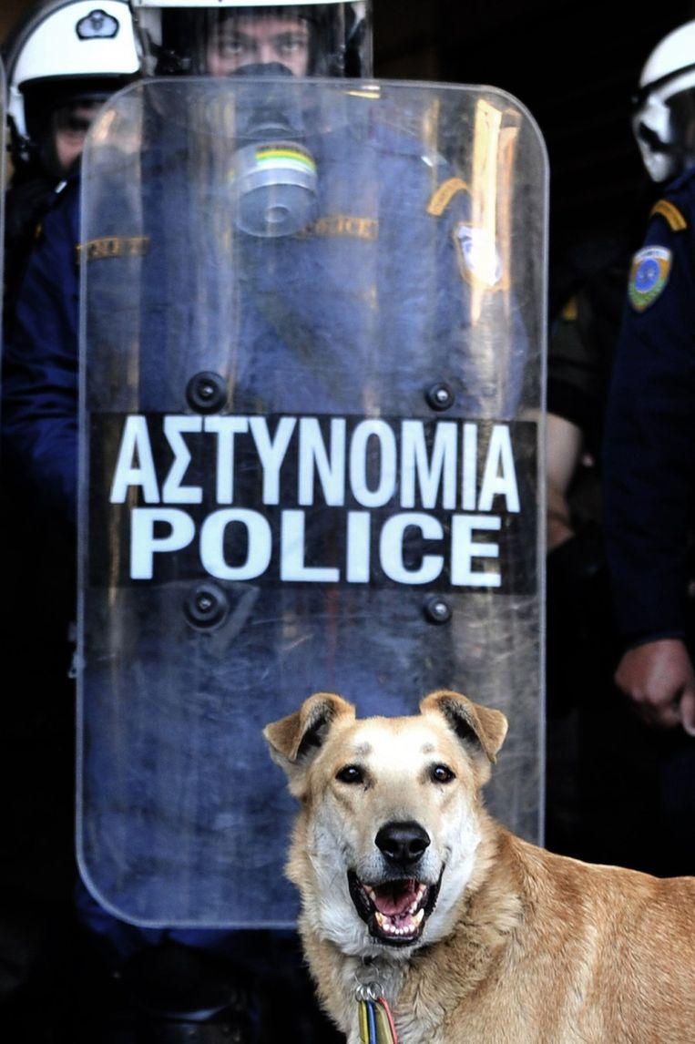 Loukanikos op 8 december 2010. © AFP Beeld