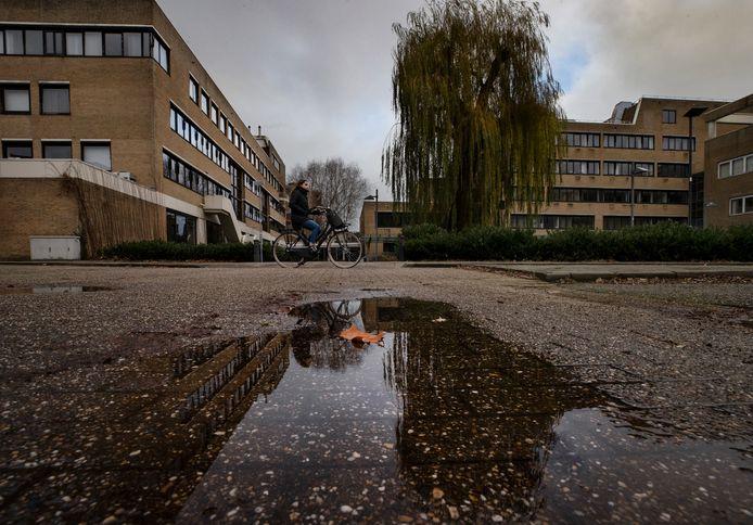 De inmiddels veelbesproken treurwilg achter het Helmondse stadskantoor.