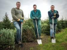 Familie De Brouwer kent alle kneepjes van het kerstboomsteek-vak: schep moet het werk doen