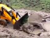 Olifant zit vast in modderpoel en moet duwtje in de rug krijgen