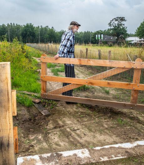Dassen kunnen kiezen in Malden: zich vastlopen in een ren of met doodsverachting de Rijksweg oversteken