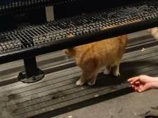 Rode kat mishandeld op TikTok filmpje in Schagen, politie start onderzoek