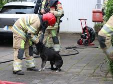 Honden gered bij woningbrand in Nagele