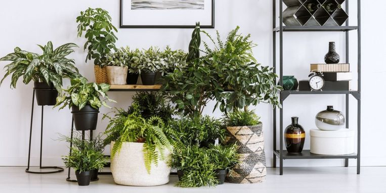 stippenplant.jpg