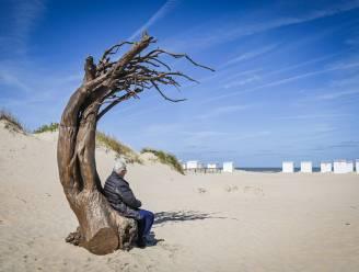 """Beaufort-kunstwerk staat op het strand in Oostduinkerke: """"Gebogen boom gemaakt met drijfhout"""""""