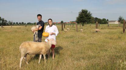 't Blatend Schaapje lanceert schapenijs