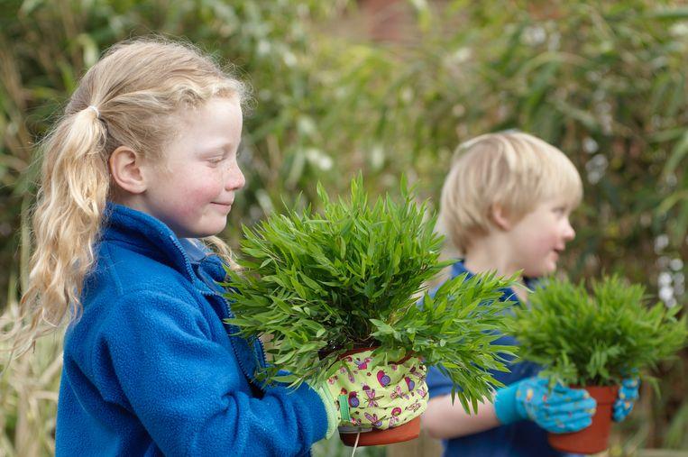 September is de maand bij uitstek om alles te planten wat je in pot of in container koopt.
