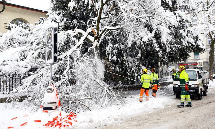 Werkers in de weer met een afgebroken tak in Zürich. Beeld van 16 januari.