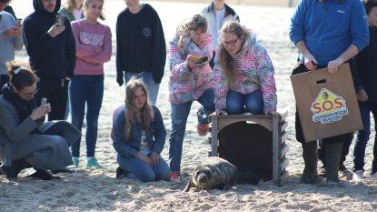 """""""Rustende zeehonden op het strand: wen er maar aan"""""""