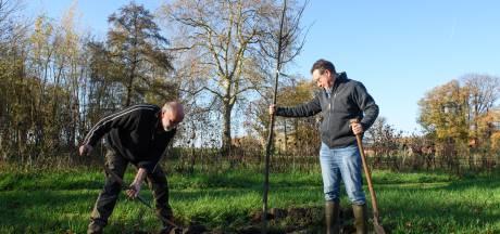 Provincie Overijssel zoekt ruimte voor miljoen bomen