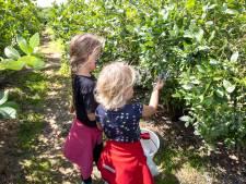 De opmars van verse groenten en fruit: corona speelt 'lokaal' in de kaart