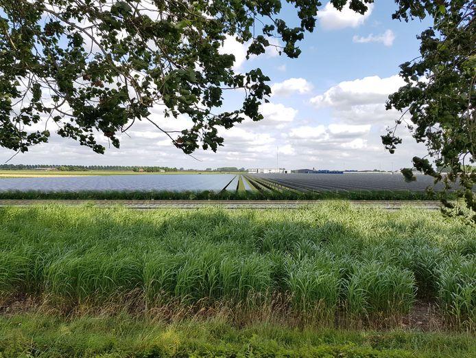 Zicht op het geplande zonnepark ten noorden van Sas van Gent, gezien vanaf het goederenspoor langs de Driekwartweg.