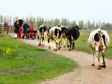 Tanthof is woest: 'Rondweg voor megaschool gaat dwars door Abtswoudsepark'